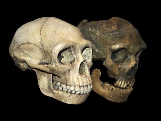 Неандертальцы и мы (рассказывает биолог Михаил Гельфанд)