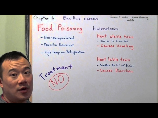 Clinical Microbiology made Ridiculously Simple Chapter 6 Part 2. Bacillus cereus