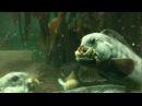 Fütterung der Seewölfe