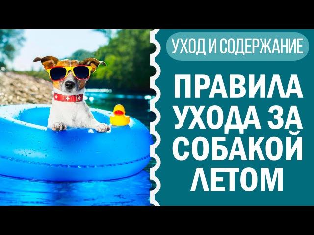 Собака летом: советы по уходу и что нельзя делать летом | Чихуахуа Софи
