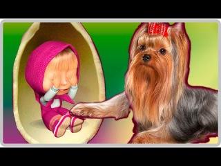 МАША И МЕДВЕДЬ НОВЫЕ СЕРИИ Собака Йорк угадывает что в киндерах машины сказки машкины страшилки