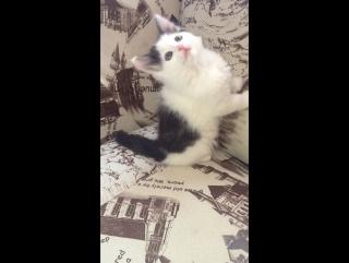 Отдам в хорошие руки котёнка (девочка)