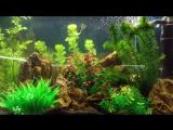 Средний аквариум