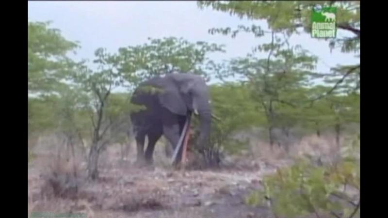 BBC «Заповедник в дебрях Африки» (01 серия) (Реальное ТВ, животные, 2005)