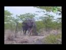 BBC Заповедник в дебрях Африки 01 серия Реальное ТВ животные 2005