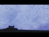 kravchenko_vad video