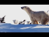 Incredibly Cute Polar Bear Cubs See the World for First Time
