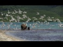 Teaser KAMCHATKA BEARS THE BEGINNING OF LIFE 6 Russia 2018 color 52 min