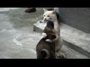 Кот обнимает и прижимает к себе собаку. Удивительно