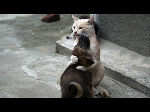 Кот обнимает и прижимает к себе собаку Удивительно