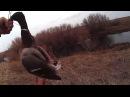 Охота на утку.10.04.16 Уйрек аншылык. Duck Hunting.Казахстан Караганды, утрянка.