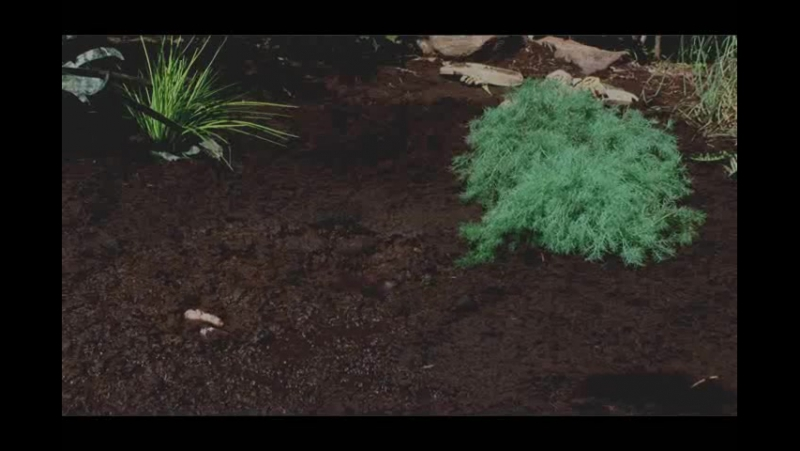 Quicksand 101 part. 2