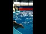 Все для ребёнка - плавание с дельфином!!!