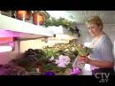 CTV.BY Минчанка собрала в своей однокомнатной квартире более 350 сортов узамбарской фиалки