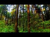 Лес. Русский Лес. Осенний Лес. Видео Лес. Прогулка по Лесу. Лесные Пейзажи. Футажи для видеомонтажа