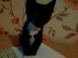 кошка и тетрадка смеялась 3-40 часа ржака