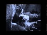 CAPTAIN BEEFHEART -- PETRIFIED FOREST