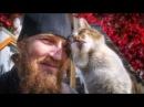 Жизнь Оптинского кота Мурзика в фотографиях
