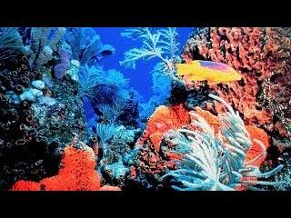 Завораживающий Подводный мир Египта. Очень интересный документальный фильм