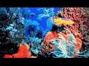 Завораживающий Подводный мир Египта Очень интересный документальный фильм