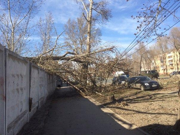 Упало дерево прям на моих глазах около