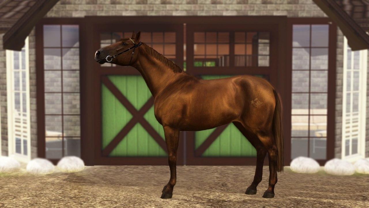 Регистрация лошадей в RHF 2 De_jLhClTow