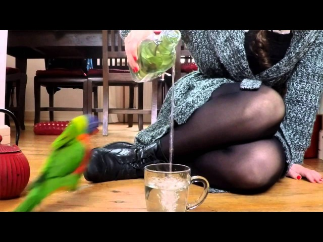 Funny Parrot Rain Dance Ritual =') | Loki the Rainbow Lorikeet