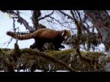 Тайны дикой природы серия 3 Затерянные миры