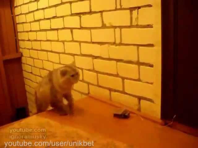 Самое прикольное видео Clever Cat (Кот звонит в звонок)