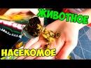 11 Обзор - Тайские чипсы, конфетки,животное