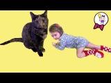 Кошечка Масяня новый питомец Саши. VLOG Знакомимся с Масей. Cat Masyanya new pet Sasha