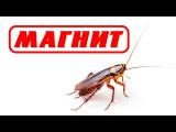 Продавец Магнита раздавила таракана на глазах у покупателей! Магнит Великий Новгород