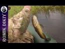 Рыбалка и охота на Топаре.  Утка, змееголов, сомик.  (1-4 сентября 2016г). Часть 2