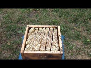 Natural Beekeeping in Georgia - Натуральное пчеловодство в Грузии