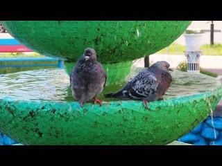 Двое купаются в фонтане,  Снято на Olympus omd e-m5 mark ii