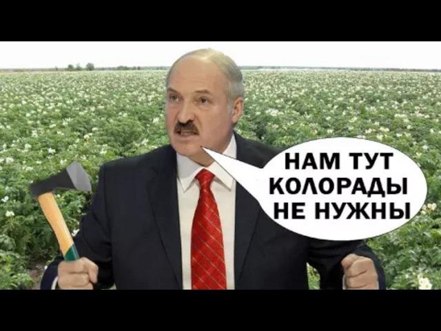 Павел Севярынец Лукашэнка баіцца даць па руках «ватнікам» і агентам Крамля Гарачы каментар
