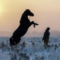 horsesbb
