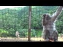 Япония тур 2 Киото Арасияма парк обезьян Иватаяма