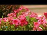 Краснодар — город цветов (фильм RTG)