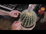 Gourski - Back Home Cactus Meets DrumBass vol.2
