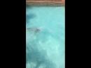 Аква парк на о.Тенерифе Канарский остров
