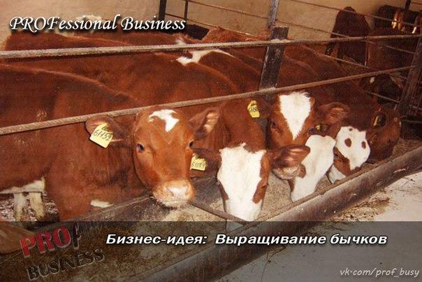 Выращивание бычков рентабельность 67