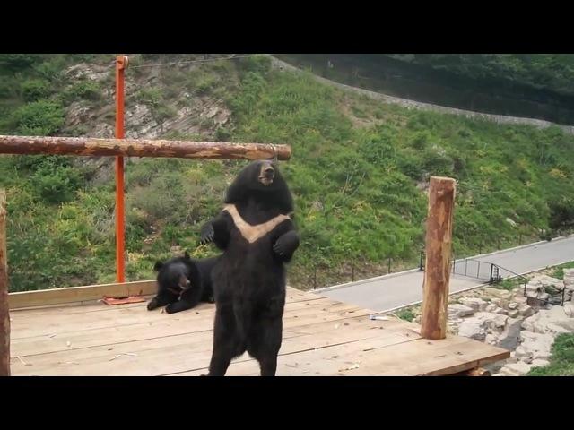 Медведь поёт ма джа джу
