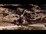 BBC - Walking With Dinosaurs SP1 Allosaurus  - ArabHD.net