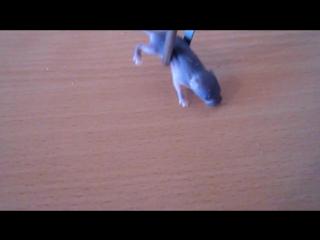 Паук ест мышь