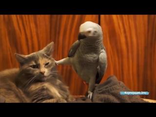 Приколы с котами и кошками - Приколы с животными. Приколы лучшие приколы 2017