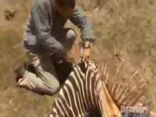 Выжить любой ценой/Man vs. Wild (2006 - 2012) Фан-трейлер