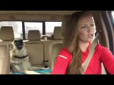 Dog Sings With Owner Karaoke We Are The Champions -  Когда твоя собака любит правильную музыку