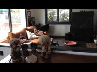 Купить дом в Италии на берегу моря недорого Лигурия