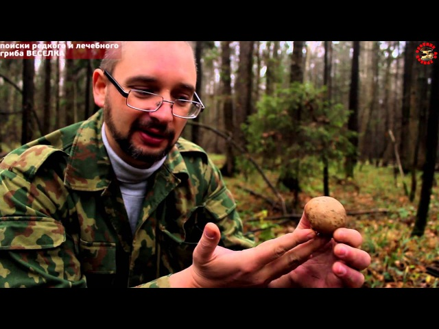 редкий гриб ВЕСЕЛКА поиск под Москвой